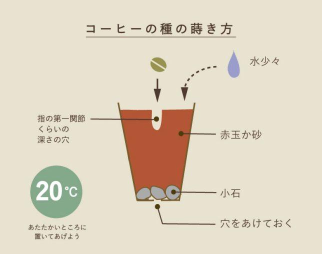 コーヒーを豆から育てる方法